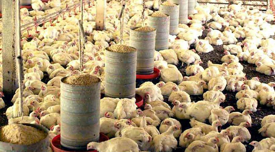 Minas Gerais es el tercer exportador de ración animal en Brasil