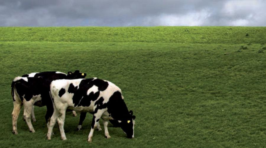 Cómo es el futuro de la nutrición animal